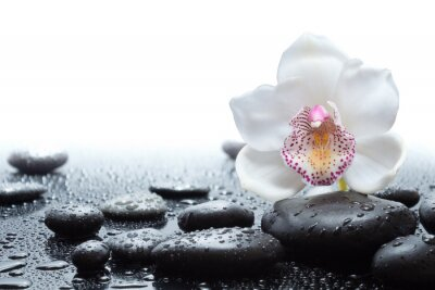 Fototapet vit orkidé och våta svarta stenar