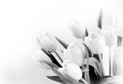 Fototapet Vit tulpaner på vit bakgrund bw
