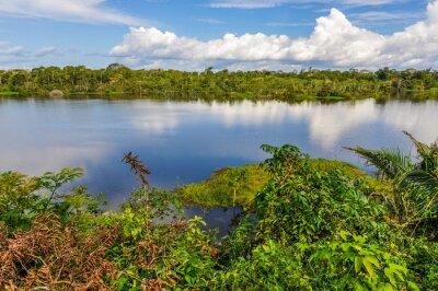 Fototapet Vy över sjön i Amazonas regnskog, Manaos, Brasilien