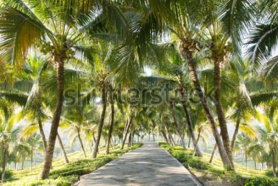 Fototapet Walkway med kokosnöt träd i trädgården
