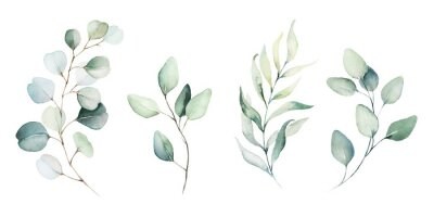 Fototapet Watercolor floral illustration set - green leaf branches collection, for wedding stationary, greetings, wallpapers, fashion, background. Eucalyptus, olive, green leaves, etc.