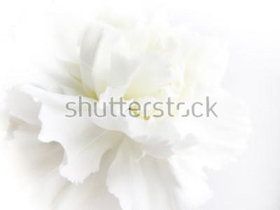 Fototapet White flowers background. Macro of white petals texture. Soft dreamy image