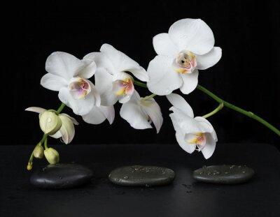 Fototapet White Orchid på en svart bakgrund