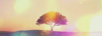 Fototapet Widescreen solnedgång träd landskap med retro effekt