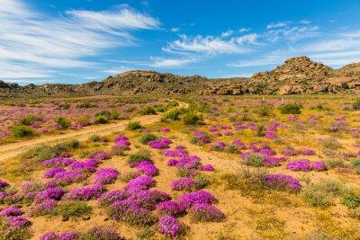 Fototapet Wildblumen i Südafrika