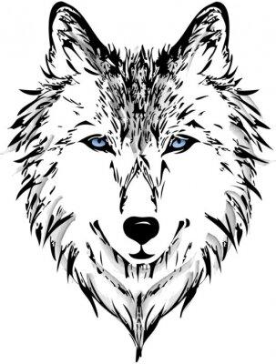 Fototapet Wolf huvudet
