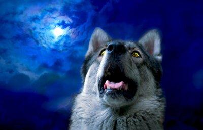Fototapet Wolf / varg på natten, valt fokusera på ögonen. Digital retusch.