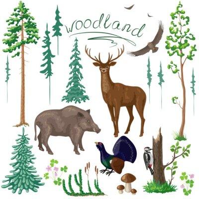 Fototapet Woodland växter och djur som