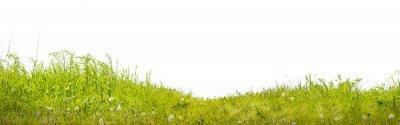 Fototapet земля с зеленой травой на белом фоне