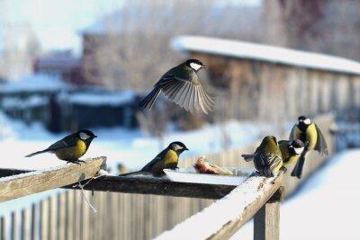 Fototapet птица синица зима кормушка много