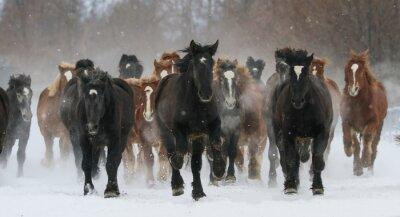 Fototapet 雪原 を 走 る 馬