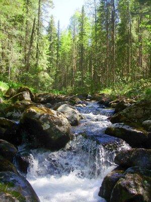 Fototapet Berget floden i barrskogen, Горная река в хвойном лесу