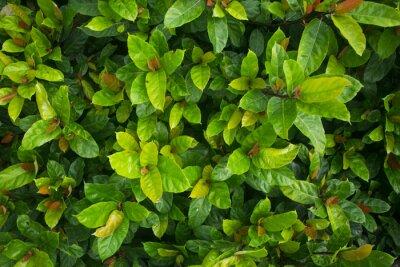 Fototapet Зелень