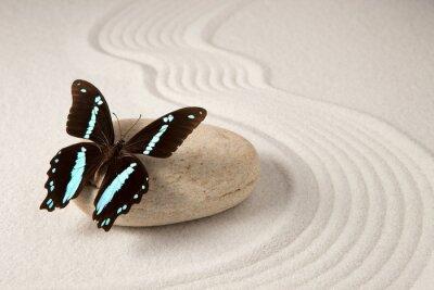 Fototapet zen fjäril
