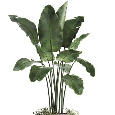 Väggdekor 3d illustration of tropical plants banana