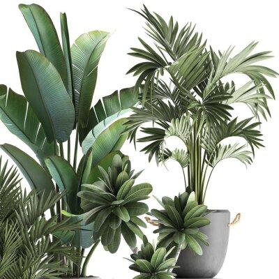 Väggdekor 3d illustration of tropical plants on white background