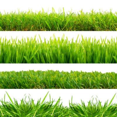 Väggdekor 4 Wiesen Gras freisteller