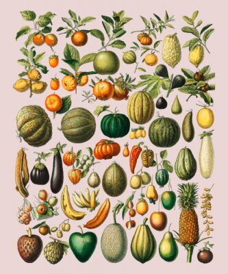 Väggdekor A vintage illustration of a wide variety of fruits and vegetables from the book, Nouveau Larousse Illustre (1898), by Larousse, Pierre, Augé and Claude, Digitally enhanced by rawpixel.