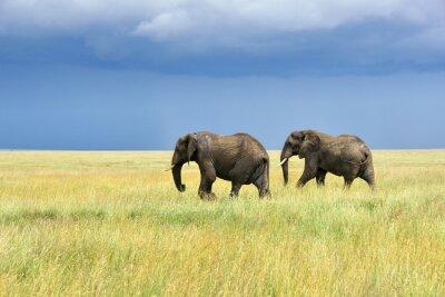 Väggdekor afrikanska elefanter