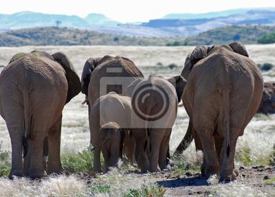 Väggdekor Afrikanska elefanter promenader genom Damaraland