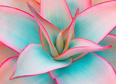 Väggdekor agavebladen i trendiga pastellfärger för designbakgrunder