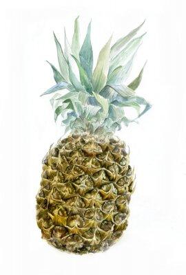 Väggdekor Akvarell ananas isolerad på vitt