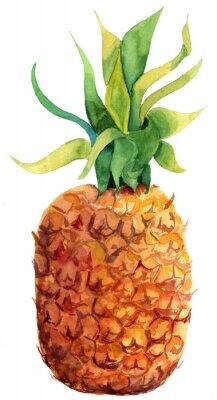 Väggdekor Akvarell ananas på vit bakgrund