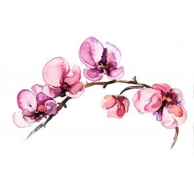 Väggdekor akvarell blommor orkidé isolerad på den vita bakgrunden