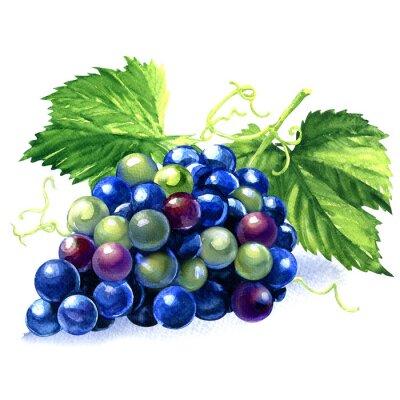 Väggdekor akvarell gäng blå druvor