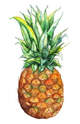 Väggdekor Akvarell handritad ananas exotiska tropisk frukt isolerad
