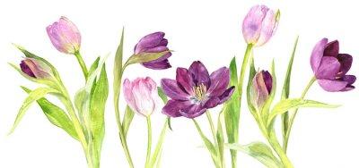 Väggdekor Akvarell lila och rosa tulpaner