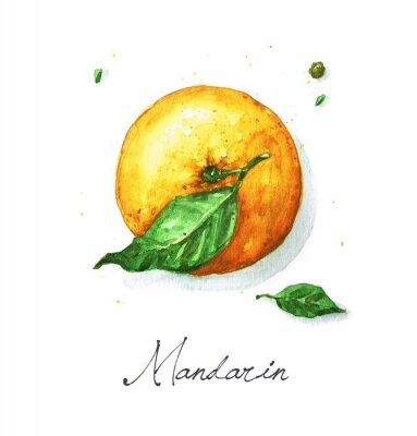 Väggdekor Akvarell Mat Målning - mandarin eller apelsin