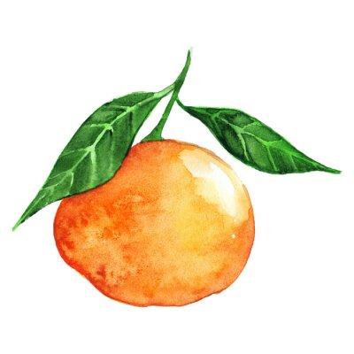 Väggdekor Akvarell mogen apelsin mandarin citrusfrukt isolerat