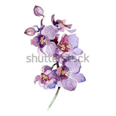 Väggdekor Akvarell orchidbukett som isoleras på vit bakgrund.