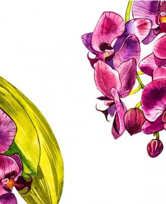 Väggdekor Akvarell orkidéfilial, handritad blommig illustration som isoleras på en vit bakgrund. Flora akvarellillustration, botanisk målning, handritning.