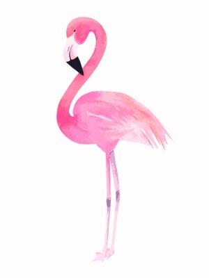 Väggdekor Akvarell rosa flamingo. vektor illustration