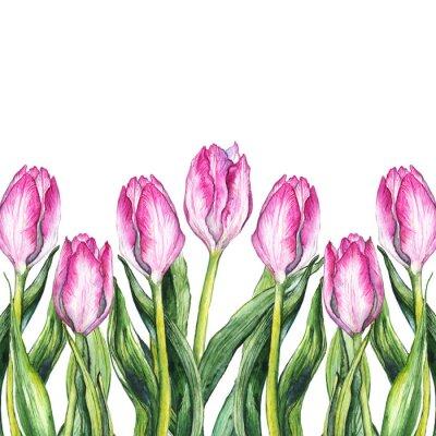 Väggdekor Akvarell rosa tulpan blomma natur gränsen ram