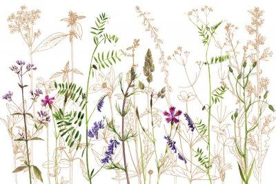 Väggdekor akvarell som drar blommor och växter