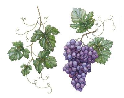 Väggdekor Akvarellillustration av druvor med blad