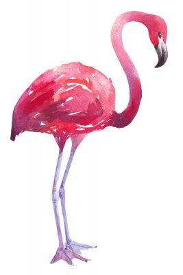 Väggdekor akvarellillustration av en flamingo