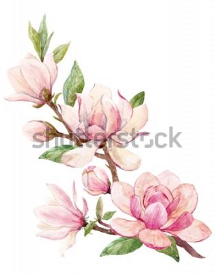 Väggdekor Akvarellillustration av en gren med blommorosa Magnolia blommakort