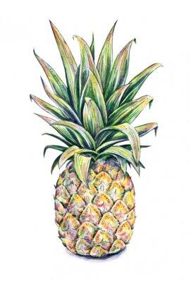 Väggdekor Ananas på en vit bakgrund. akvarell illustration