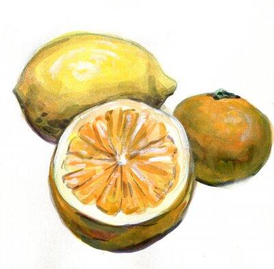 Väggdekor Apelsin, citron, mandarin. Citrusfrukter. akvarellmålning