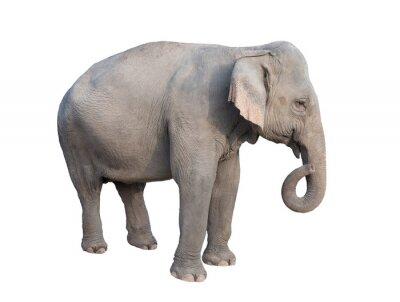 Väggdekor asia elefant