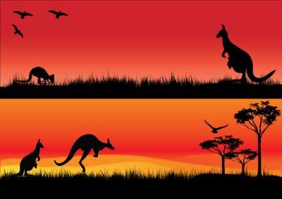 Väggdekor Australian kängurur i solnedgången