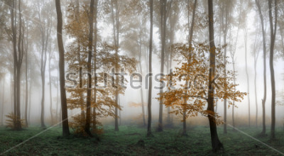 Väggdekor Autumn foggy forest. Balkan Mountains, Bulgaria.