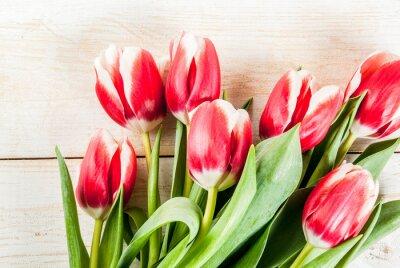 Väggdekor Bakgrund till grattis, gratulationskort. Färska vår tulpaner blommor, på vitt trä bakgrund topp vy kopia utrymme