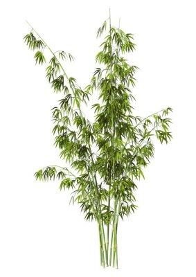 Väggdekor Bamboo Tree