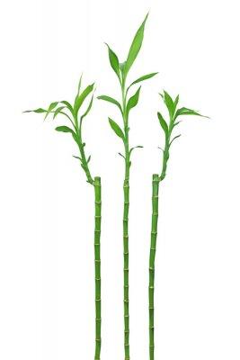 Väggdekor bambou
