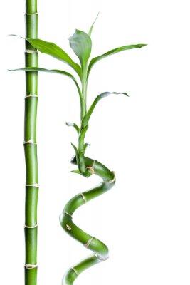Väggdekor bambou zen